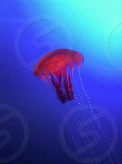 This jelly photo