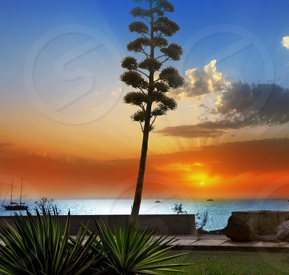 Amadores agave sunset in Gran Canaria Canary islands photo