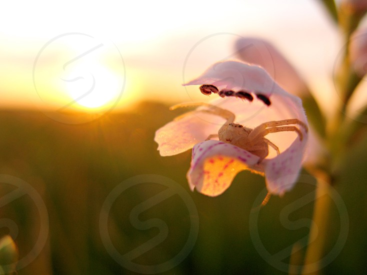 purple orchid on sunrise view  photo