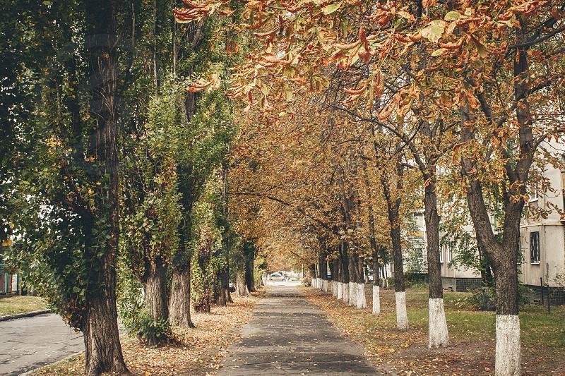Golden autumn trees on city streets. Kremenchuk Ukraine. photo