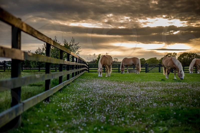 Horses landscape summer Ireland photo