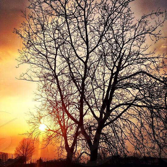 Everyday beauty. photo