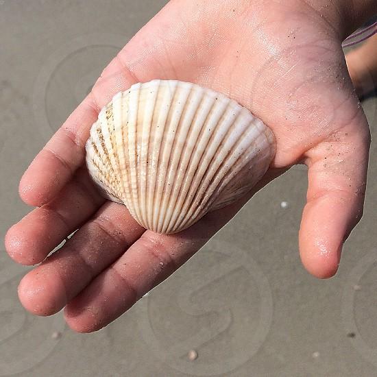white sea shell photo