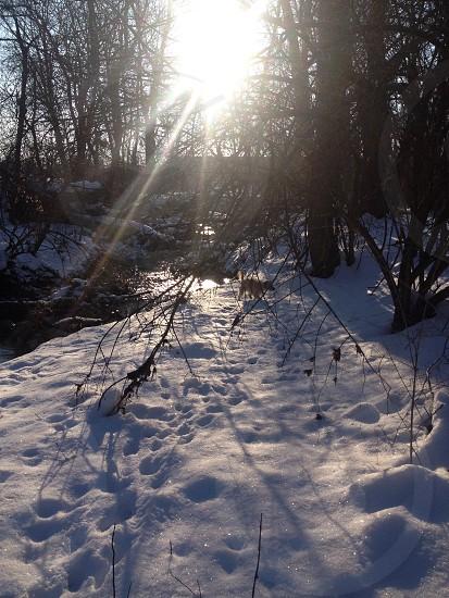 Goose Creek photo