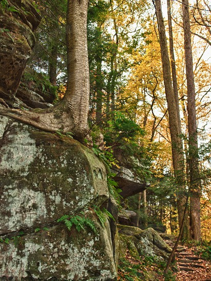 Tree on cliff. Stone ledge. Autumn color. Fall. Green. Yellow. Stairs. Staircase. Steps.  photo