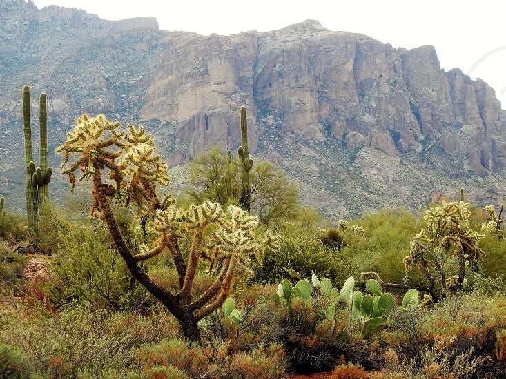Apache Junction Az photo
