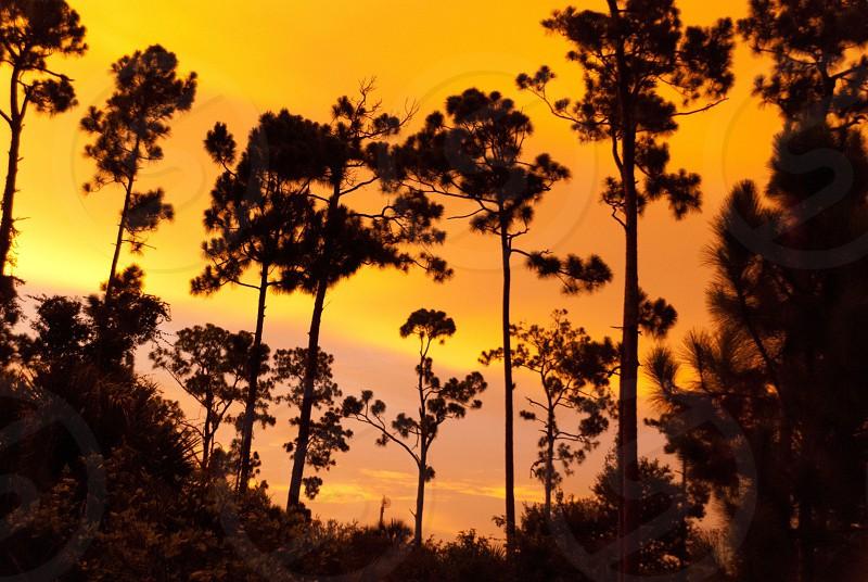 Sunset through trees photo