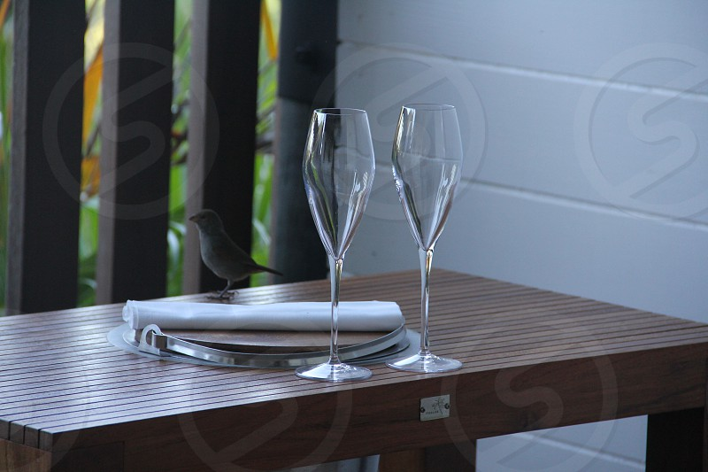 wine glass champagne flute finch bird just for two couples retreat honeymoon horizontal deck terrace no people drink fancy empty glass fragile outside  photo