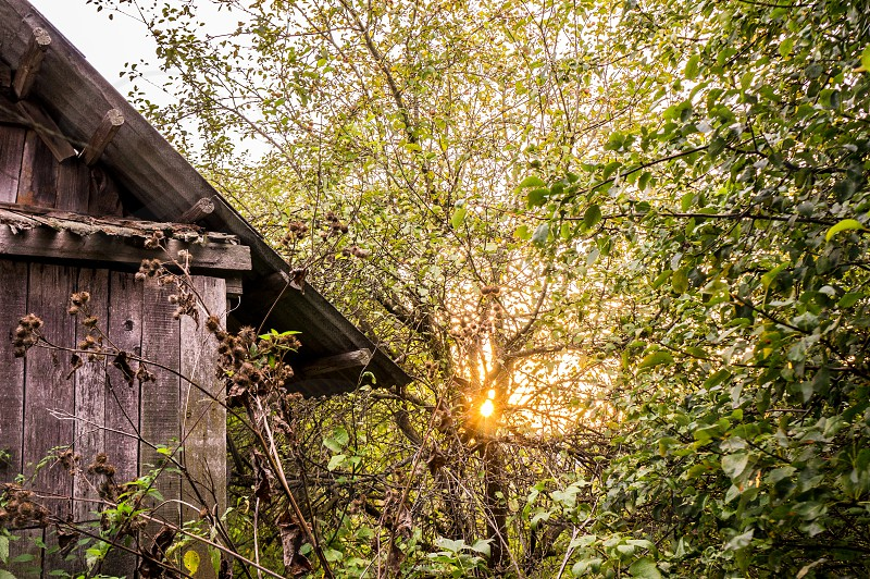 Cabin drowning in plants at the sunset. photo