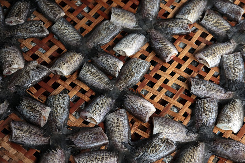 fish at the foodmarket at the Morningmarket in Nonthaburi north of the city of Bangkok in Thailand in Suedostasien. photo