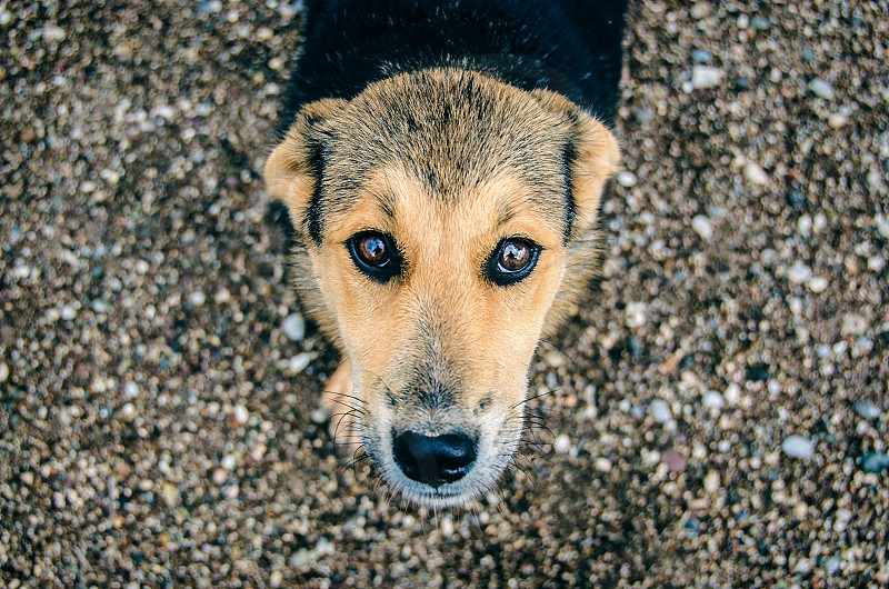 A photo of a brown dog with big loving eyes. photo