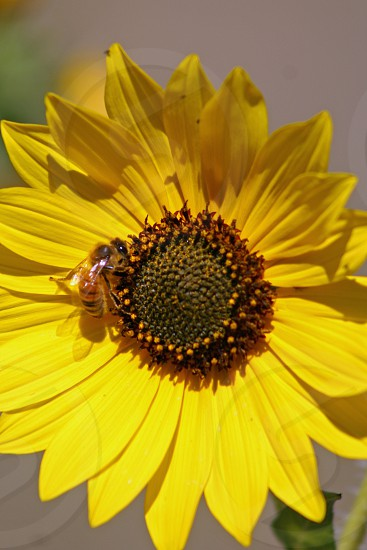 Pollination photo