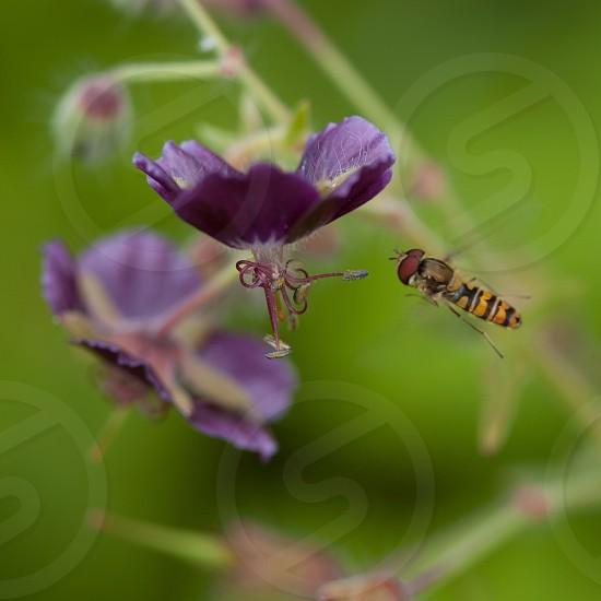 small purple flower photo
