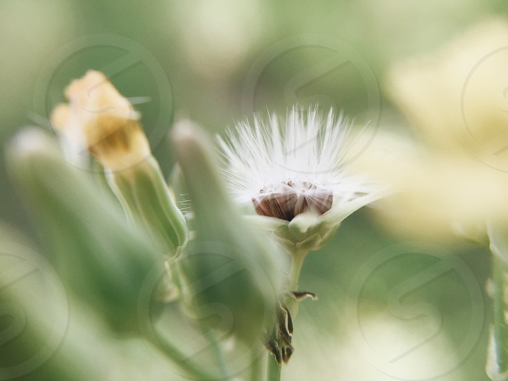 white flower in full bloom  with green leaf photo