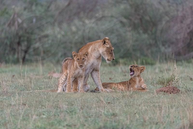 Murchison Falls Uganda Africa Safari photo