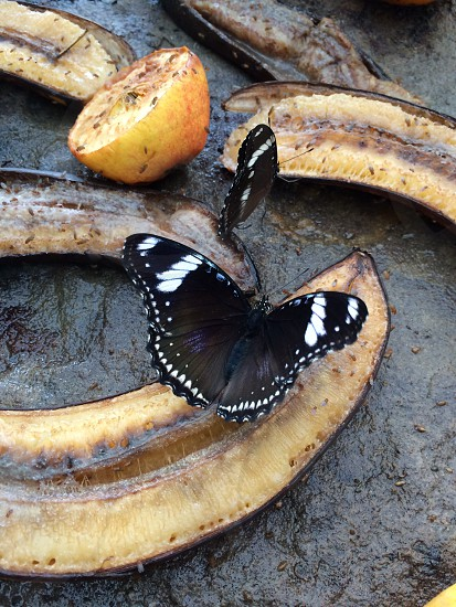 Butterflies and bananas photo