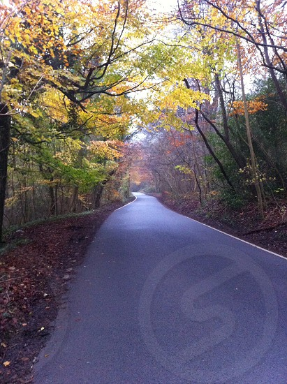 Cranham woods photo