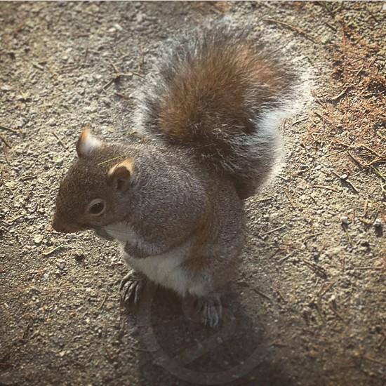 Squirrel. photo