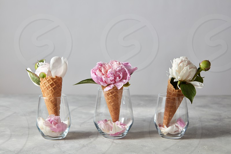 Delicate pink and white peony flowers in a wafer cones in a glasses with petals standing on a gray stone table copy space. Top view. Spring concept of congratulations for March 8. photo