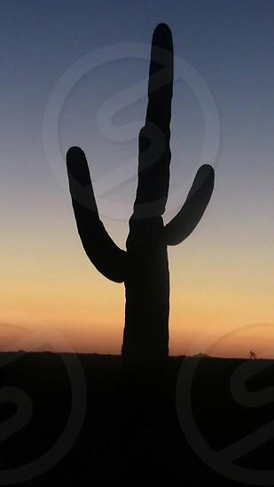 Cactus at sunset Tucson Arizona photo