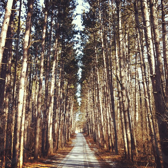 winter path pine trees running path winter walk photo