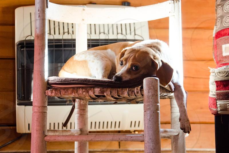 Dog resting photo