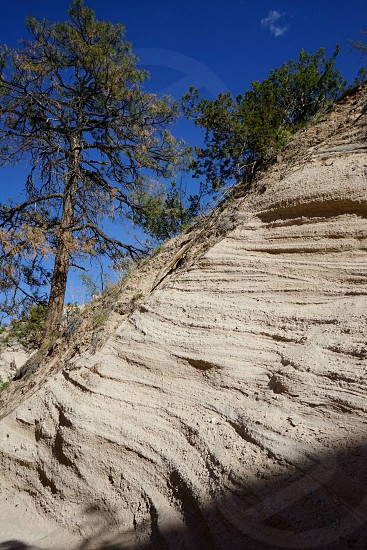 Trees growing in striated sandstone on a steep incline against nearly clear blue sky. photo