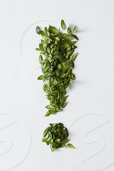 Exclamation mark from green leaves isolated on white background. High resolution conceptual grass symbol isolated on white. photo