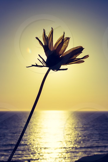 Small flower in sunset photo