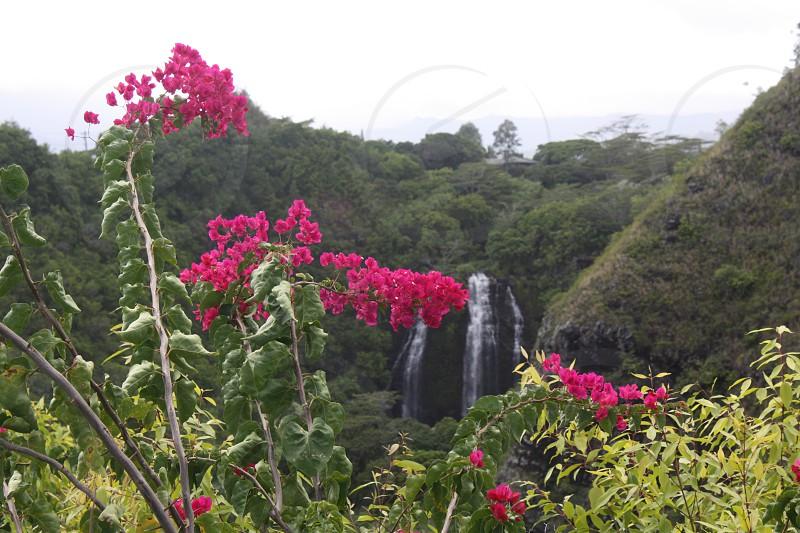 Tropical Flower with waterfall Kauai Hawaii photo