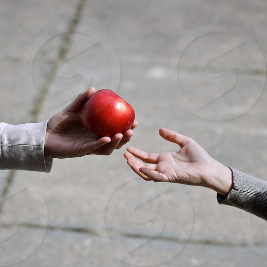 hands apple fruit give photo