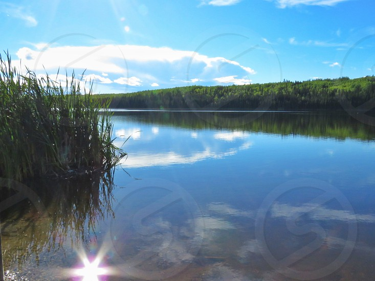 lake water bullrushes reeds blue sky clouds summer reflection  sun rays trees landscape photo