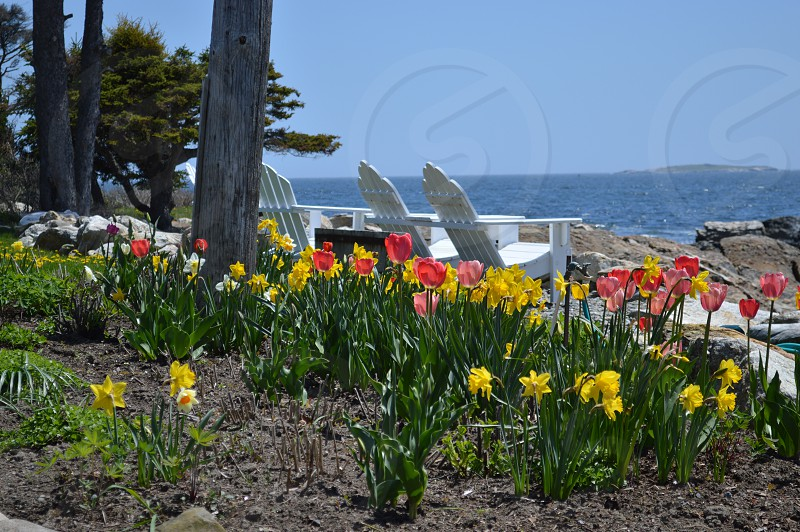 Adirondack chairs at the beach spectacular view spring at Ocean Point Maine photo