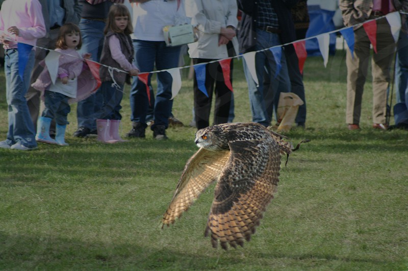 Eagle Owl in flight photo