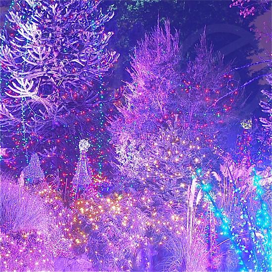 Celebration Christmas Holiday Season Illumination photo
