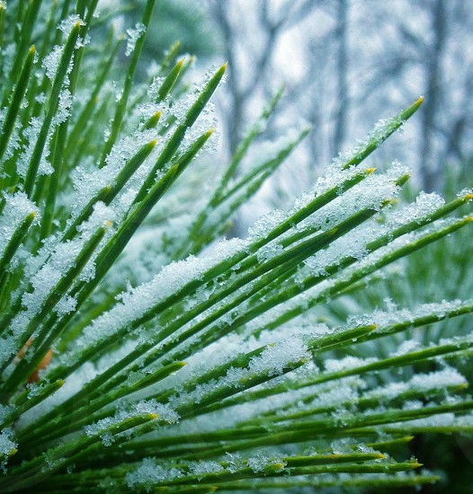 green plant with snow photo
