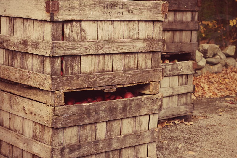 Rustic wooden crates of apples on country farm harvested in fall. photo