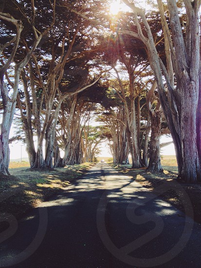 roadway between tress view photo
