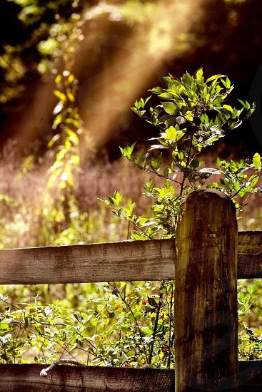 Sunlight morning farm fences nature photo