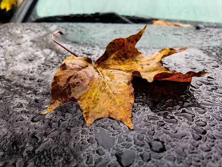 A soggy fall day. photo