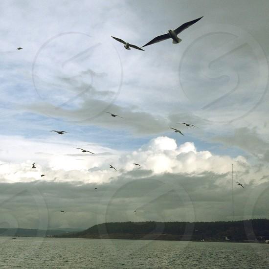 white gray seagulls photo