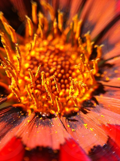Macro of orange and red flower photo