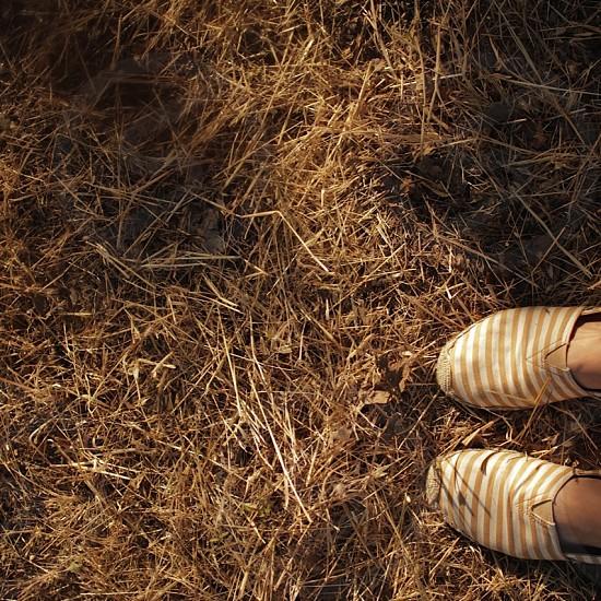 Hay Day ^^ photo