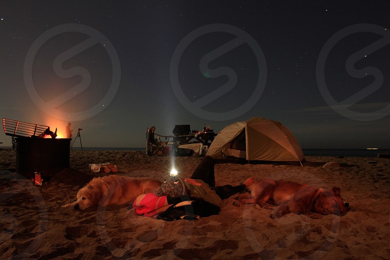 Camp camping fire beach dog tent  photo