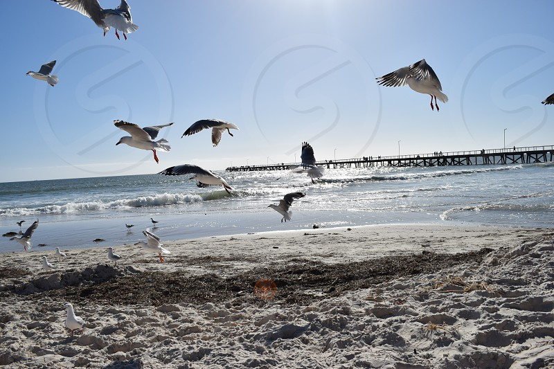 Seagulls ont he beach photo