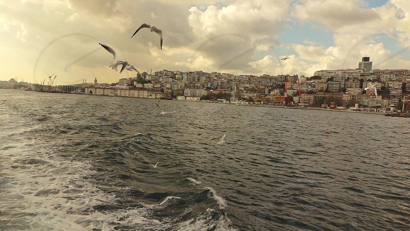 Flying seagulls birds behind tourist ship above Bosphorus strait in Istanbul on a background of cloudy sky. Slow motion Full HD video 240fps 1080p. photo