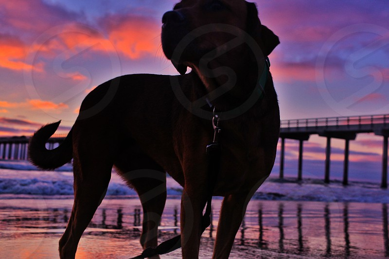 Being at the beach at beautiful sunset with my dog who was rescued from an unhappy living condition.  photo