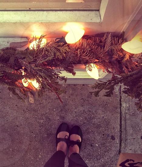 pine leaves photo