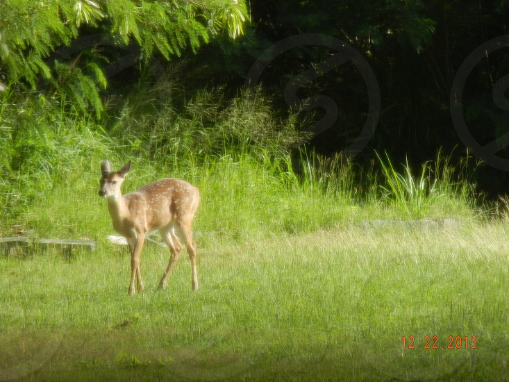 Animal; deer photo