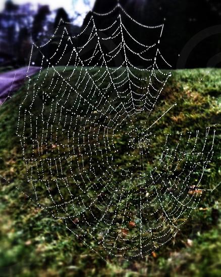 Morning dew spider web  photo